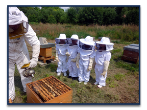 Beekeeper tending a boxed hive with students watching.